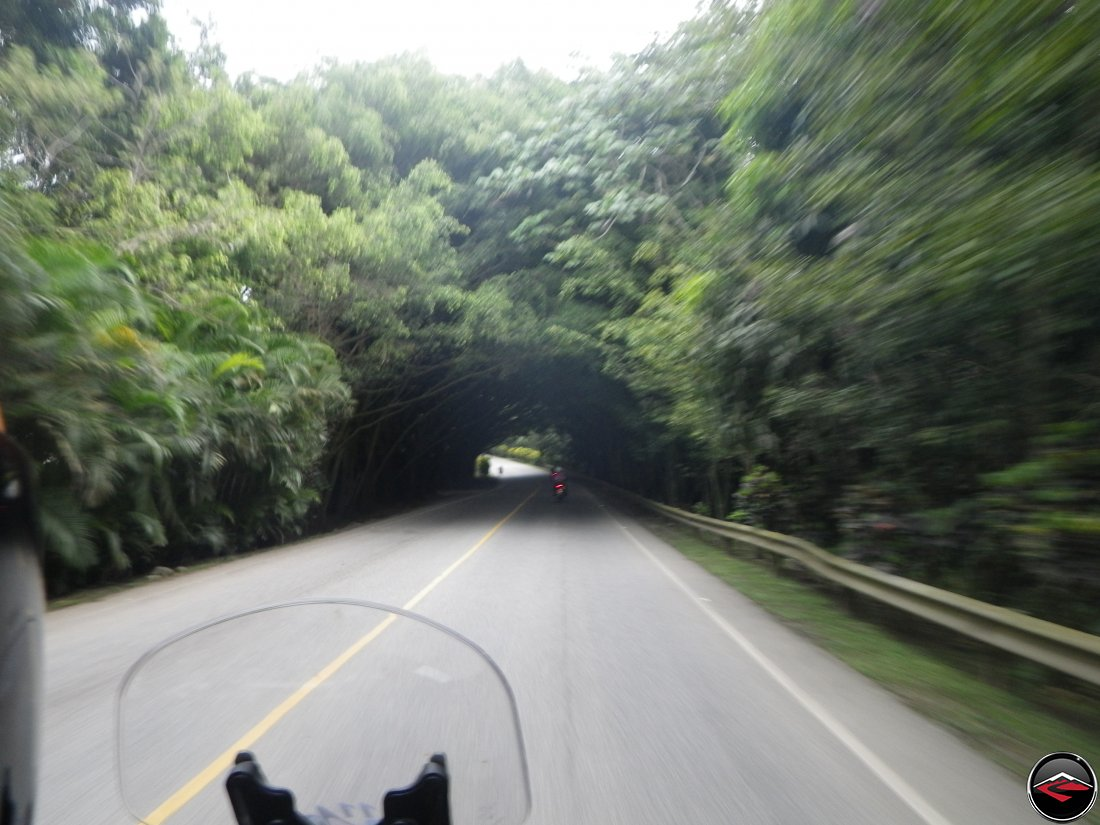 Riding a motorcycle on highway 28 through a tunnel of dense trees near Jarabacoa Dominican Republic