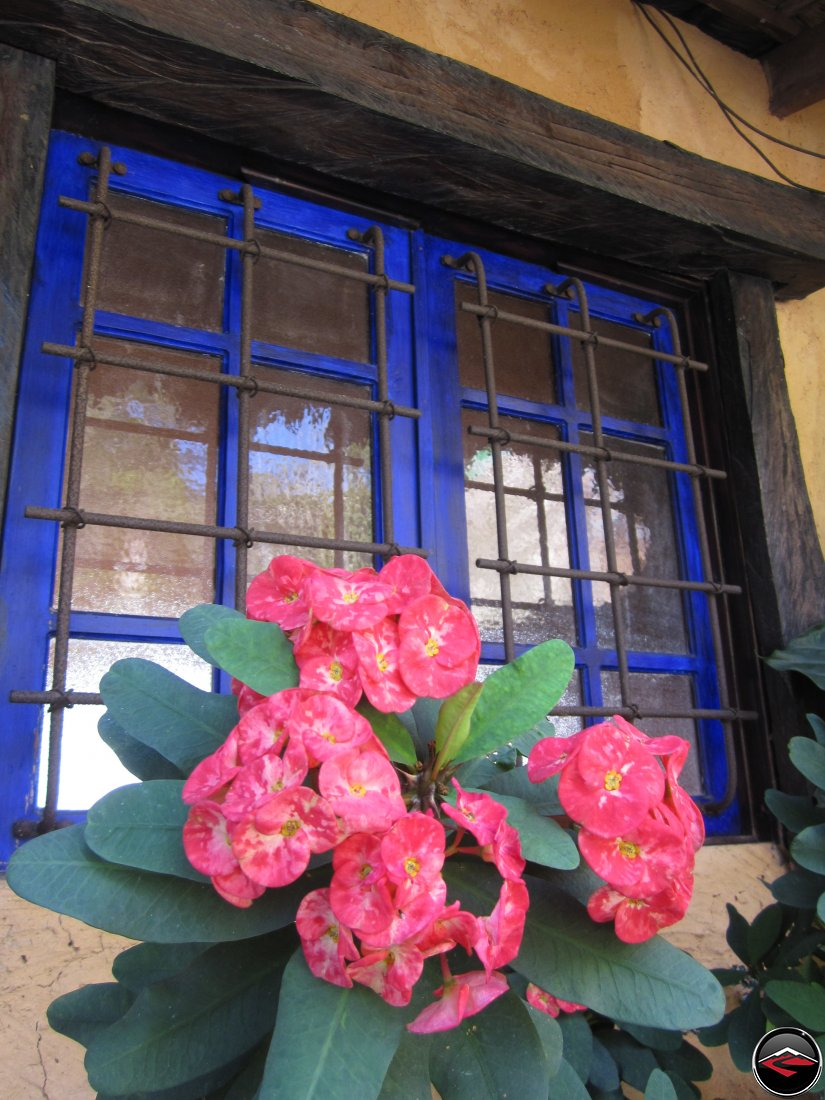 Flowers in front of a caribbean window at the Cafeto Restaurant Espaillat Dominican Republic