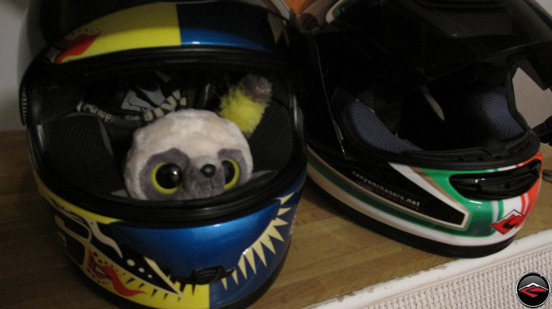 stuffed animal in a motorcycle helmet
