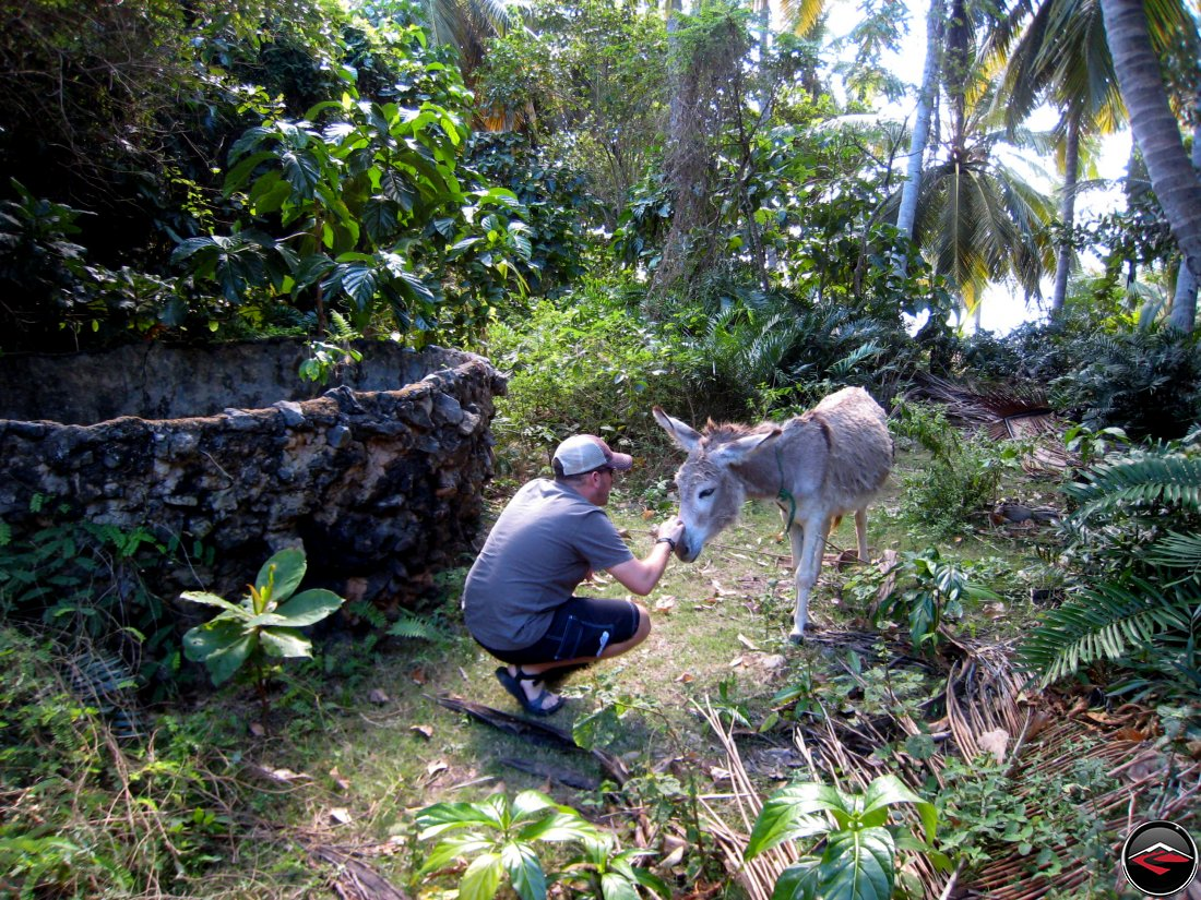 man petting a little donkey