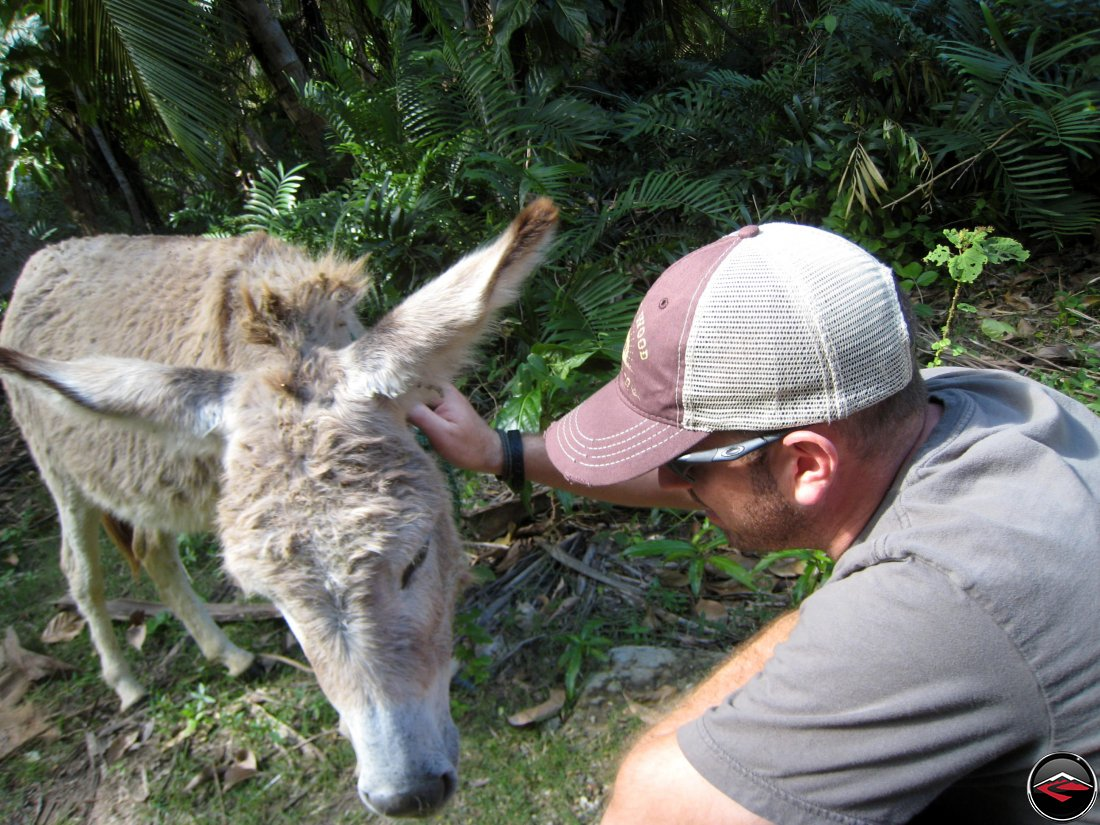 man scratching the ears of a little donkey
