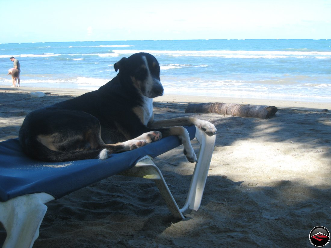 stray dog sitting on a beach chair