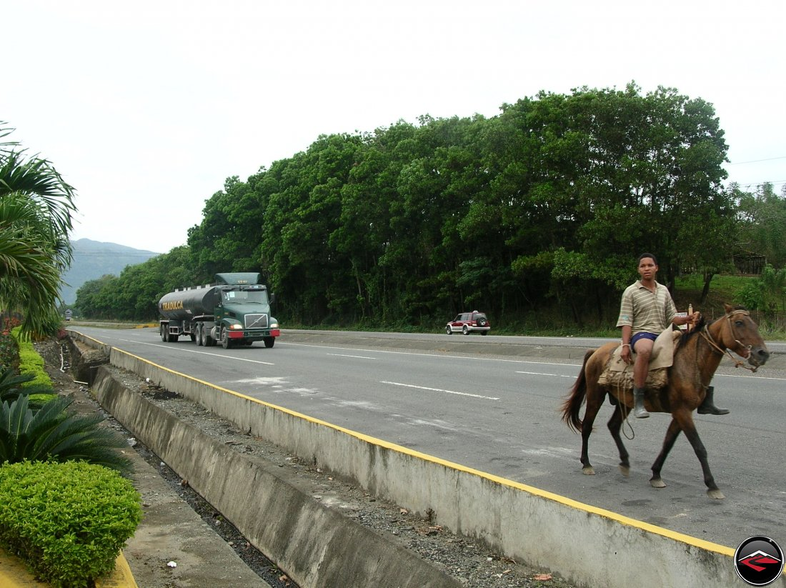 horses on the freeway