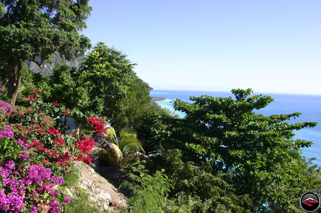 Caribbean vegetation and flowers with the ocean in the background